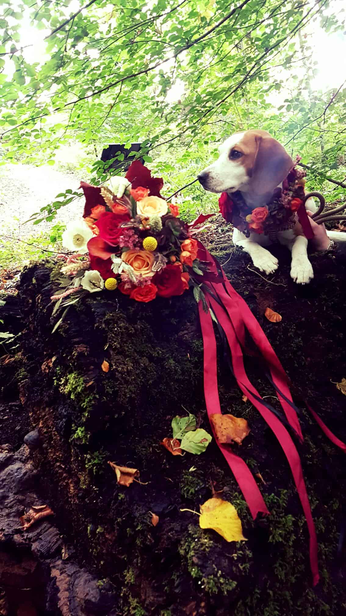 Beagle resting on the fallen tree