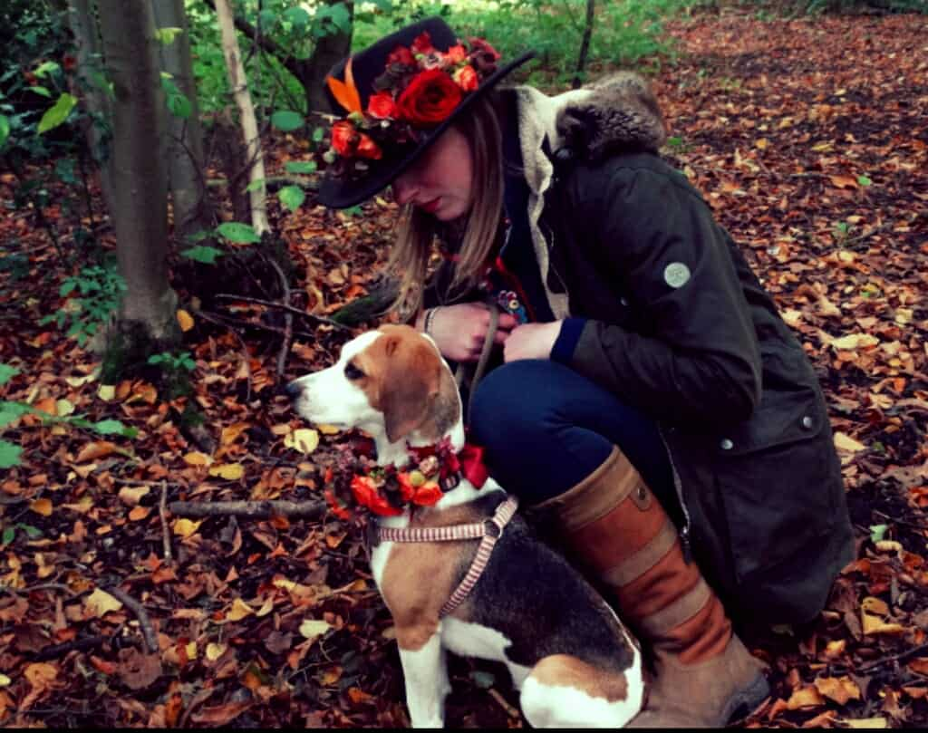 Beagle flowers listening